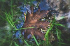 Лист клёна на воде.