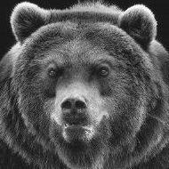 YAR_bear_